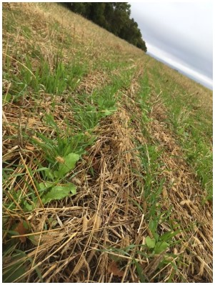 One soil health principle is maintaining soil armor. Covering the soil allows the producer to suppress weeds, preserve optimal soil temperature and manage moisture in the field.