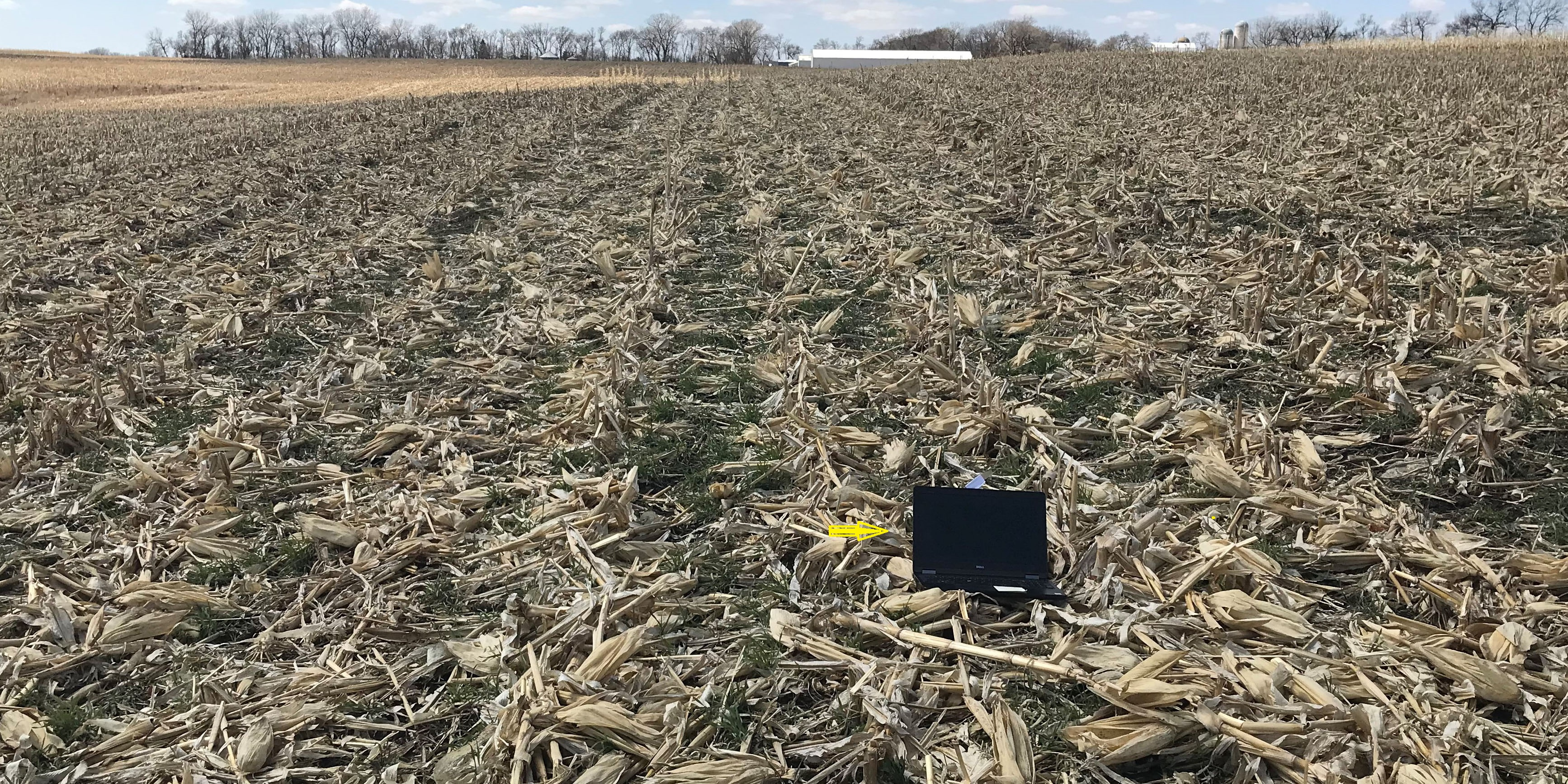 SD team looks remotely at cover crop field web with arrow 2
